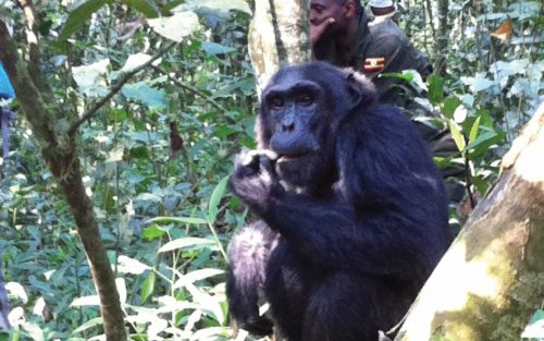 5 Day Gorilla Tracking & Wildlife Tour