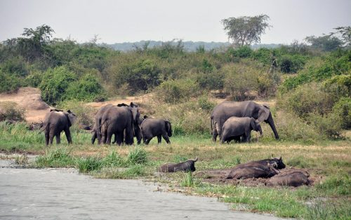 3 Days Queen Elizabeth Safari Uganda